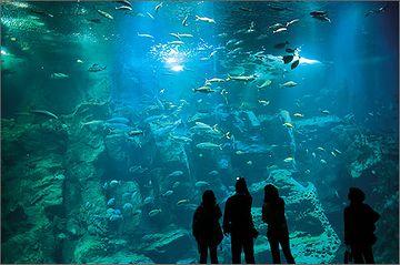 『男鹿水族館GAO』男鹿の海大水槽