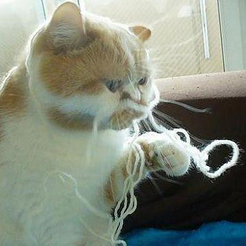 よれ絡む糸が、ようやくほぐれて来たな