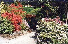 Ilam Garden path
