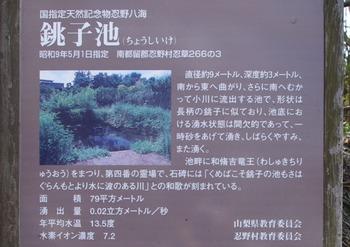 24 (800x564)