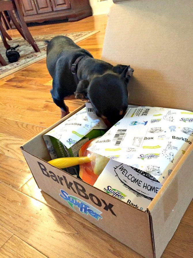 Buddy và Bark Box của anh ấy