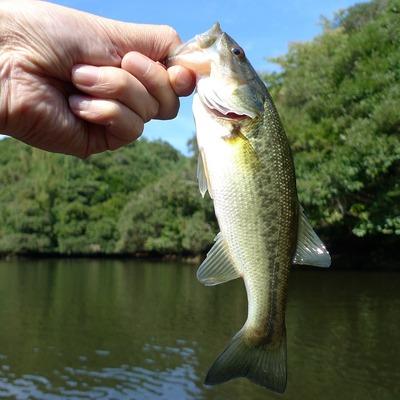 fishing-766952_960_720