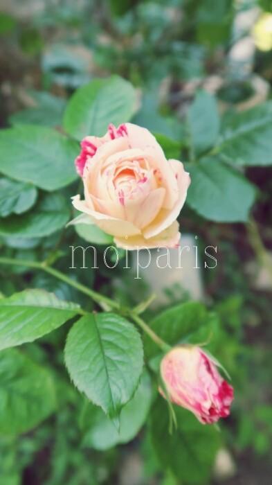 IMG_5614 - コピー
