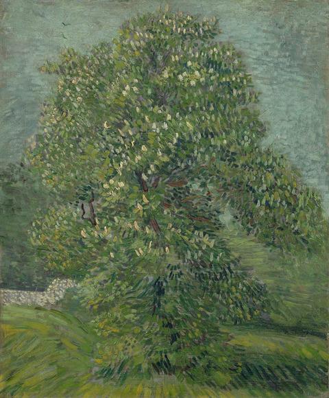 花開いたくりの木vangoghmuseum-s0126V1962-800