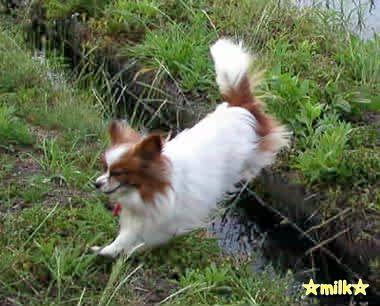 milk-jump
