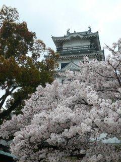 今治城と桜