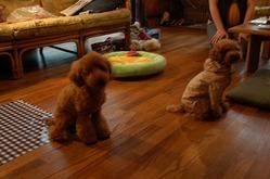 新しいお友達のクルミちゃんと遊びました!!