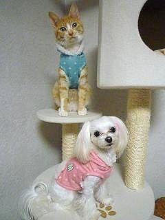 猫ちゃんとお揃い♪