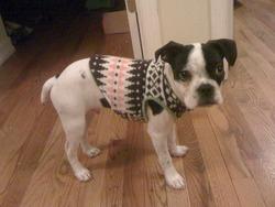 NYから、おしゃれな犬服!