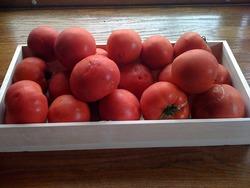 衝撃のトマト