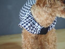 流行りのフリル袖作ってみました~♪
