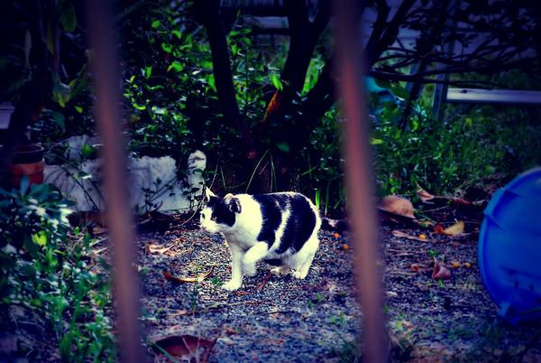 猫-1-DSC_5136-1400