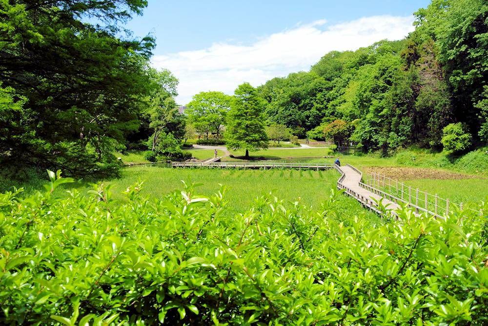 片瀬山の自然