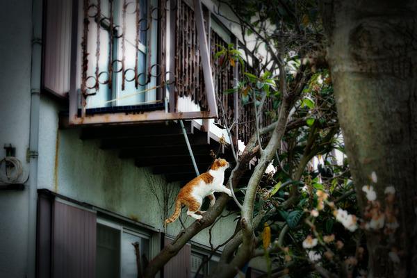 猫-1-DSC_5131-1400