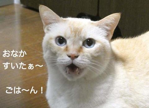 ごはん のコピー 2