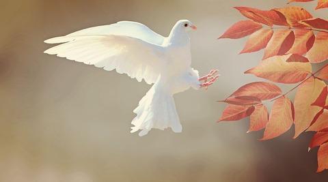 dove-2516641__480