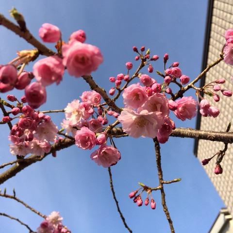 2014-04-01-07-05-46