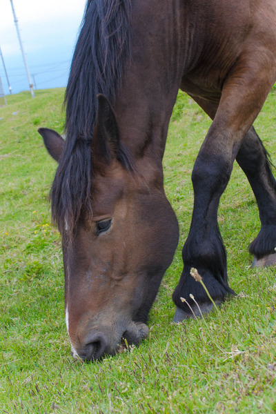 horse-25