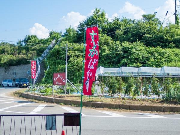 20180714_fujihei_yamanashi-346