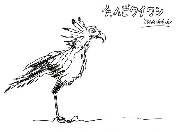 21_kikuchi