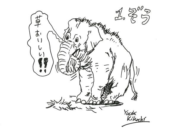 17_kikuchi