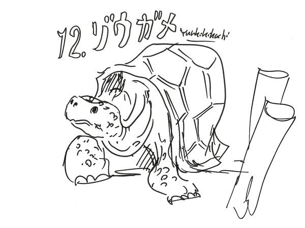 37_kikuchi