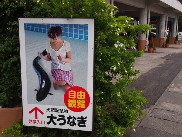 東京別視点ガイド : 未確認生物イッシーって結局どうなったの?鹿児島県の「池田湖」で確かめてきた