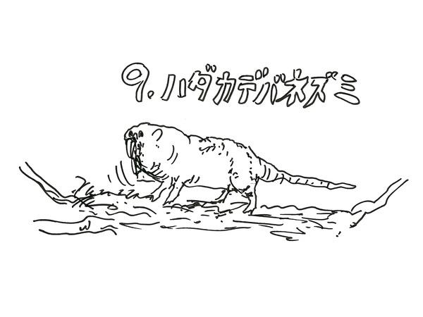 31_kikuchi