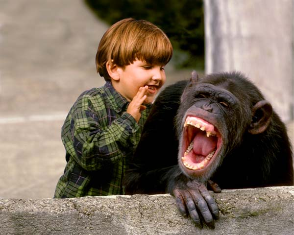 laughing_chimp