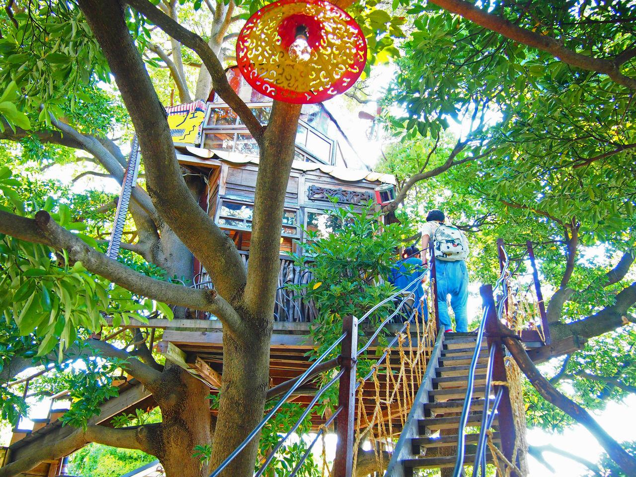 ツリーハウス,カフェ,秘密基地,東京,神奈川,まとめ,画像