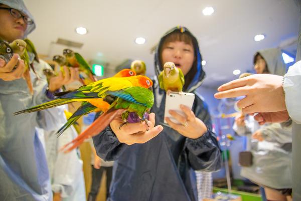 ・160925_bird-36