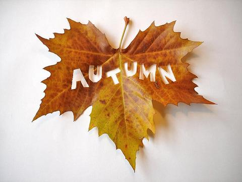 枯葉autumn20141015