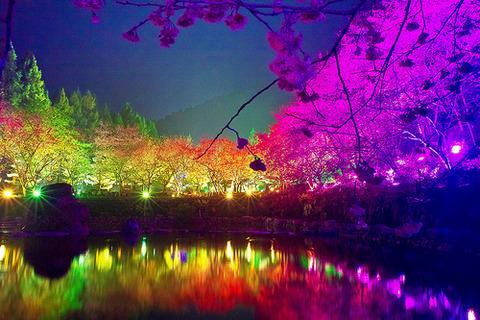 桜レインボー2014330