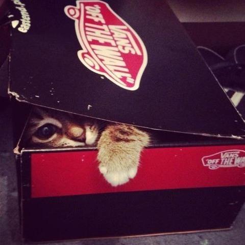黒と赤の箱から手を出す猫