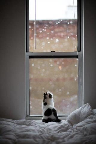 白いベッドの上で窓の外の雪を見上げる猫