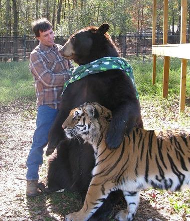 熊と虎と男性