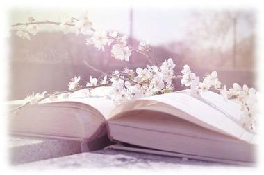 桜が本の上に2014330