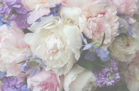 ぼかしの効いた白、紫、薄ピンクの花