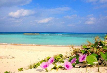 海と浜木綿