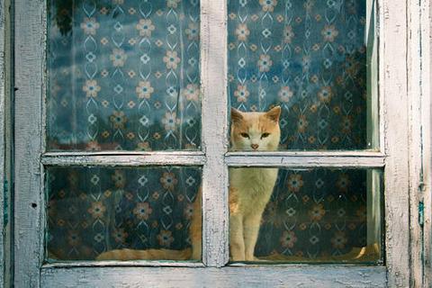 部屋の窓からこちらを眺めてる猫
