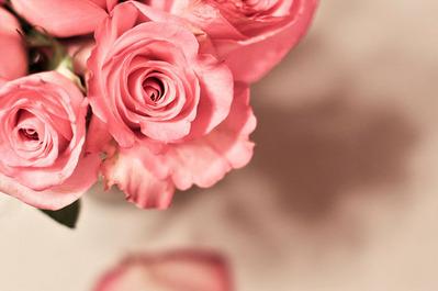 左上にピンクのバラがいくつか