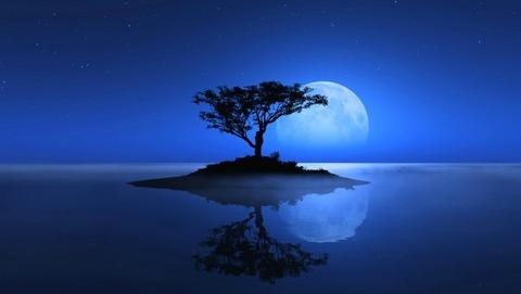 綺麗な満月と水面に反射する木