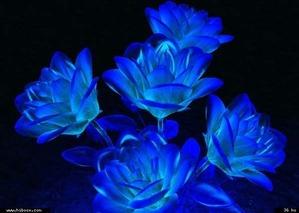 青いガラスのような花