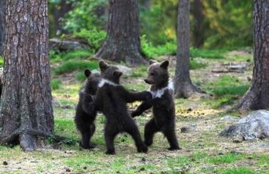 子熊3匹 森の中
