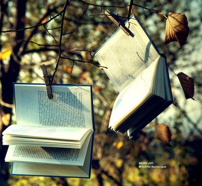 木の枝に2冊本がぶら下がって20141109