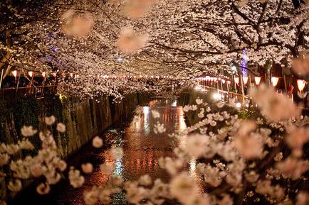 桜祭り夜の川