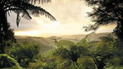 ジャングルを見渡す20141104