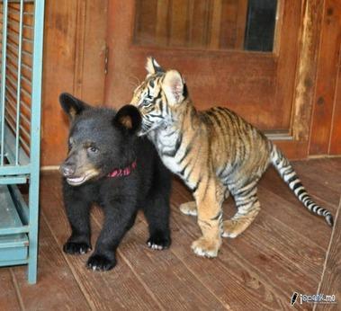子熊と子虎