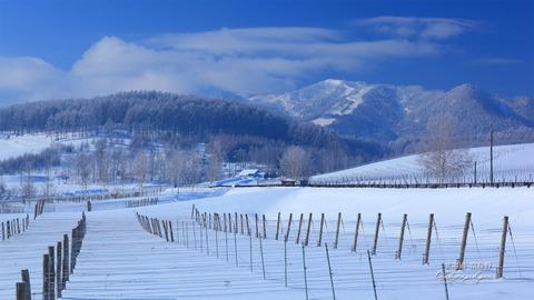 雪の富良野20141228