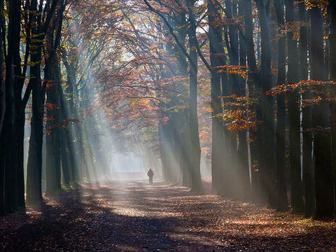秋の森林・木漏れ日20141015